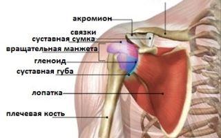 Строение плечевого сустава и его заболевания