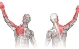 Почему болят руки от плеча до кисти