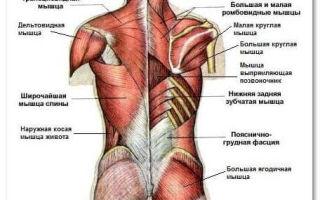 Растяжение мышц спины и позвоночника