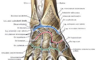Пястно-фаланговые суставы и их патологии