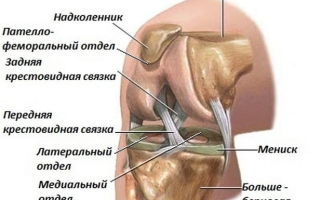 К какому врачу обратиться при боли в колене