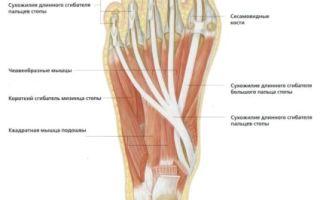 Мышцы стопы
