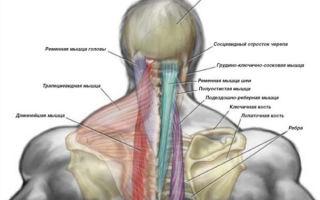 Как расслабить шейные мышцы