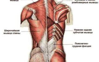 Почему болят мышцы спины и как это лечить?
