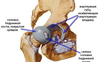 Тазобедренный сустав и его патологии