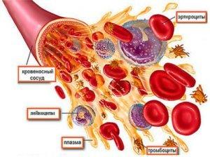токсичность в крови