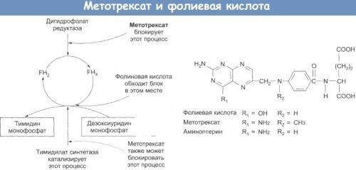 Метотрексат и фолиевая кислота