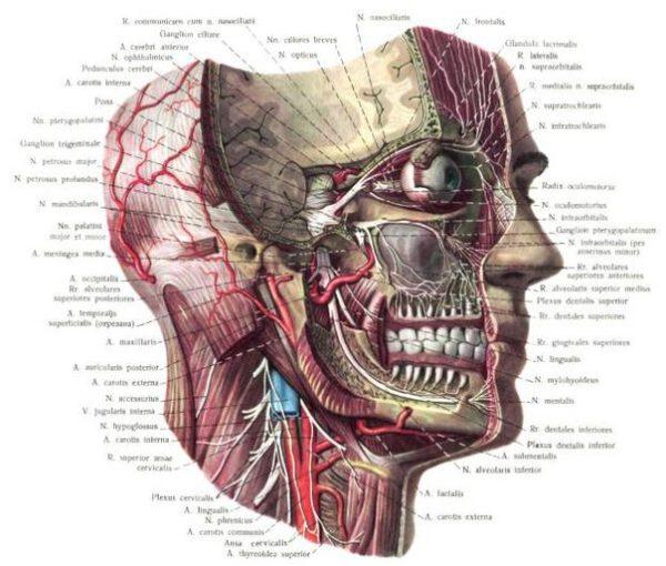 Артроз челюстного сустава лечение народными средствами