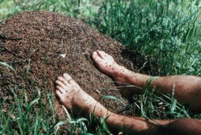Ноги в муравейнике