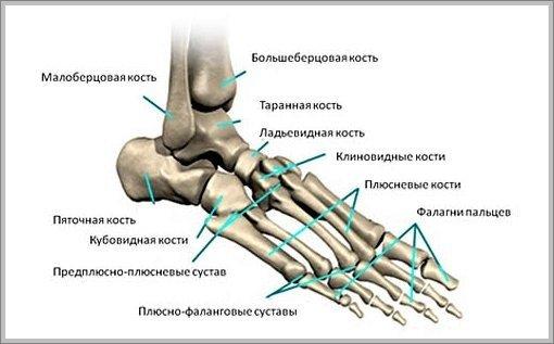 Плюсниевые кости