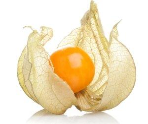 плод физалиса