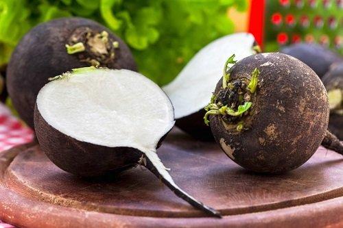 плоды черной редьки