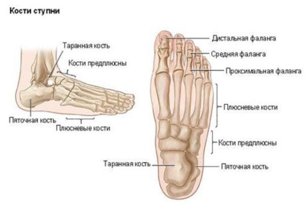 Боли в плюсневых суставах ног закалькованность плечевого сустава