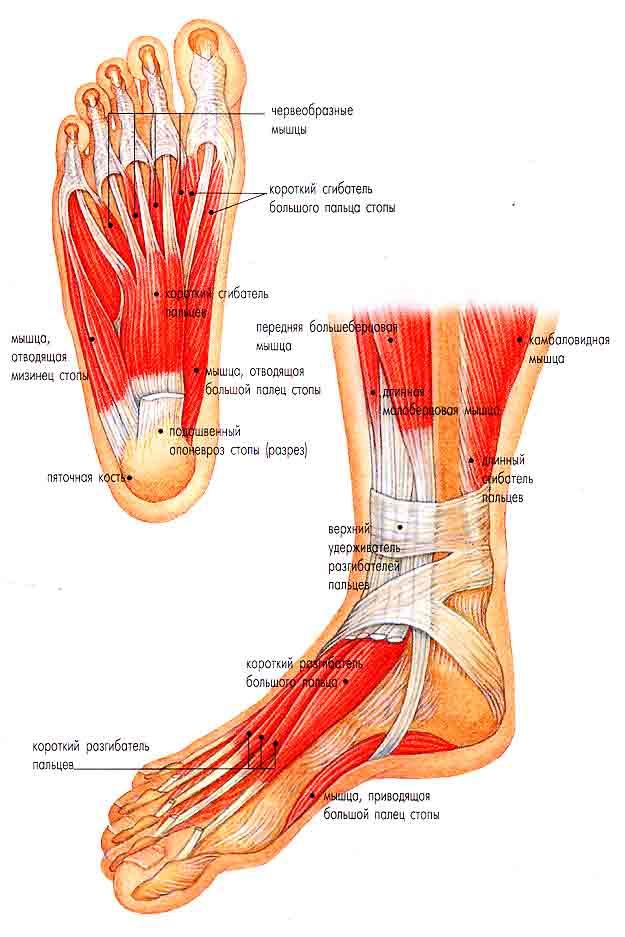 Причины боли в стопе сбоку с внутренней стороны