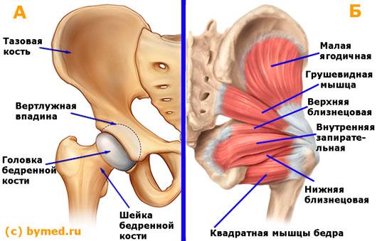 Болезни тазо-бедренного сустава узи и мрт коленного сустава