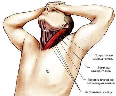 Как расслабить мышцы головы и шеи