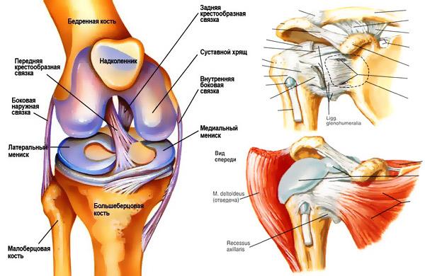 Как восстановить суставы и связки