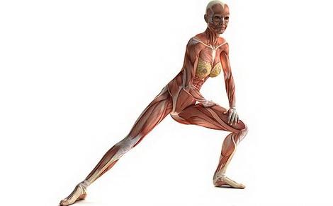 Как укрепить связки и сухожилия