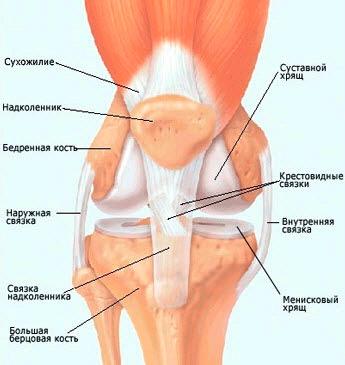 Заболевания сесамовидных костей коленного сустава лучелоктевой сустав движения