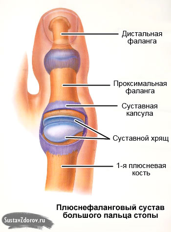 Первый сустав пальца массаж при остеофите коленного сустава