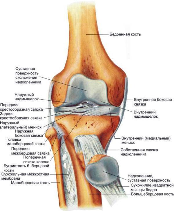 Дискомфорт в коленном суставе при длительных нагрузках суставы жри