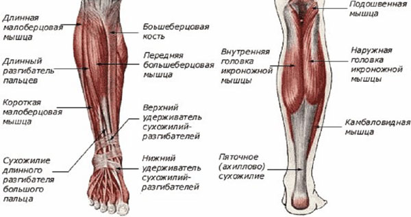 Онемение ноги ниже колена: причины и лечение