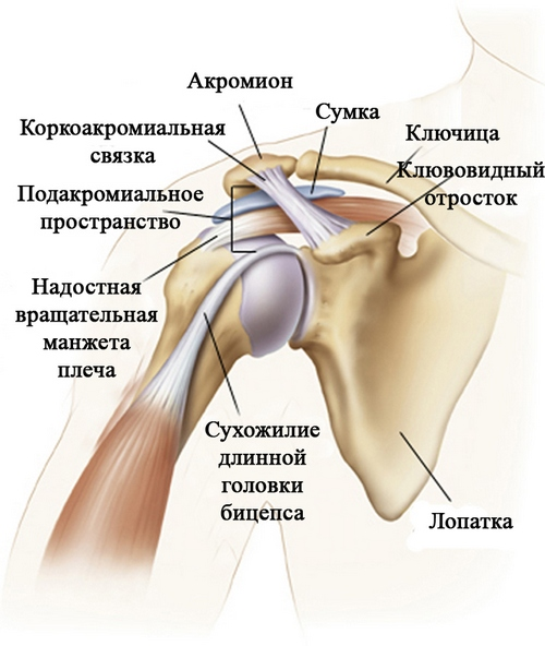 Артроскопия плечевого сустава разрушает суставы книга которая лечит болезни позвоночника и суставов скачать