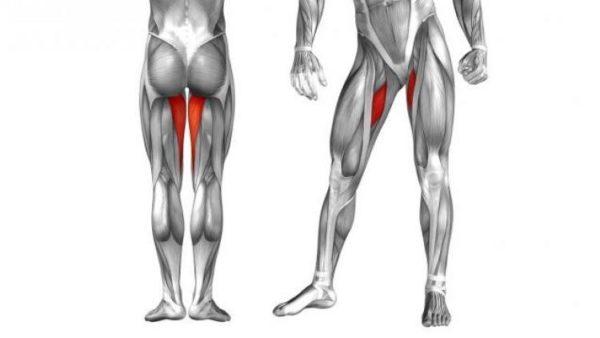 Причины боли в ноге от ягодицы до колена