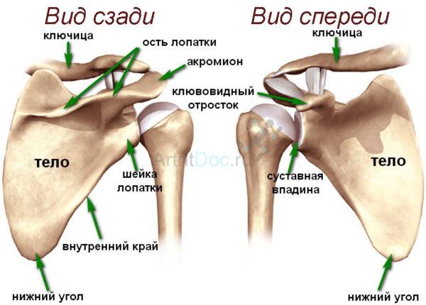 Боль в правом плечевом суставе фото как улучшить суставы