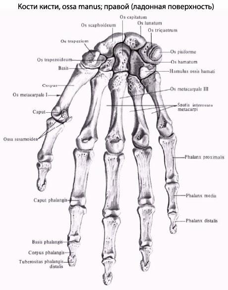 Техника введения дипроспана в 1 плюснефаланговый сустав массаж суставов позвоночника