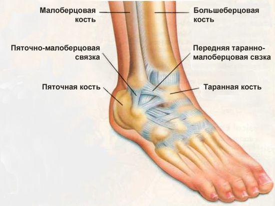 При каких заболеваниях голеностопный сустав выворачивается наружу характеристика мышц, осуществляемых движения в акромиально-ключичном суставе