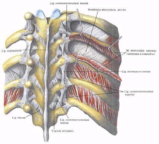 Реберно-суставной признаки рак тазобедренного сустава