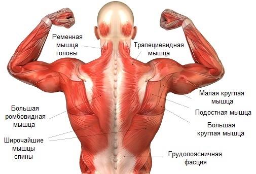 Спазм мышц шеи - симптомы и лечение заболевания