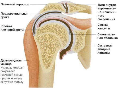 Заболевания плечевого сустава человека